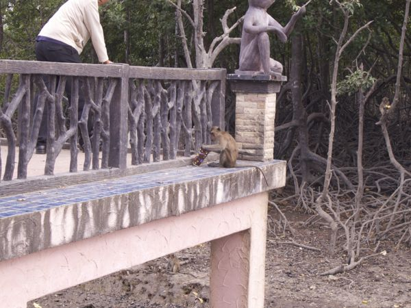 Monkey drinking out of a cup he found