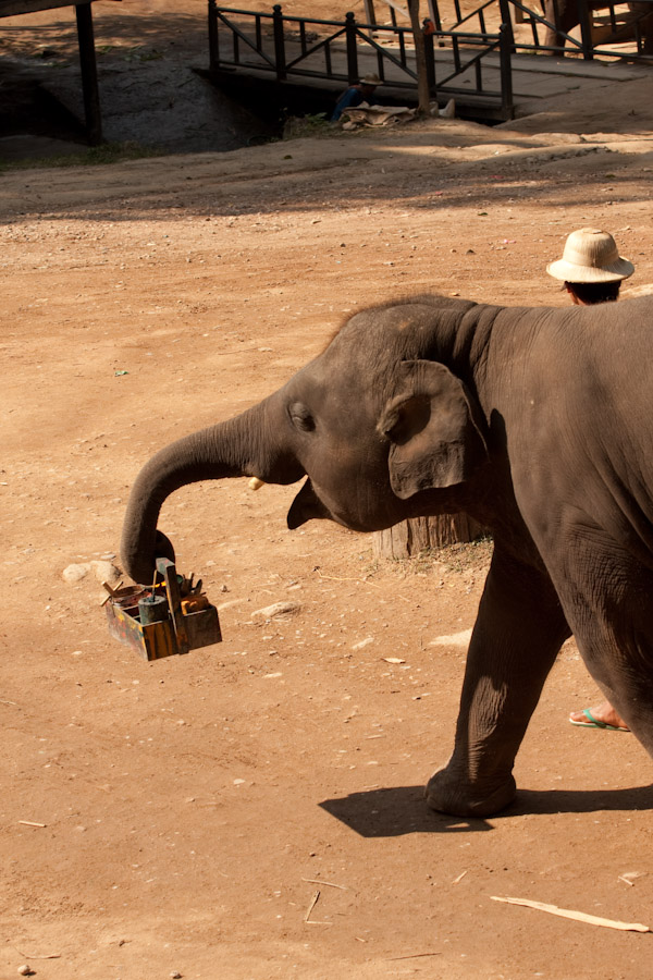 Elephant putting away his paints