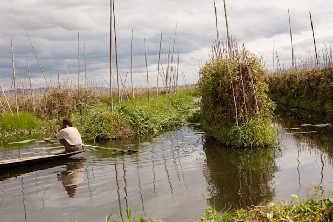 Farmer Tending to His Floating Garden on Inle Lake